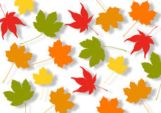 Autumn leaves. Illustrated colorful autumn leaves on white background Royalty Free Stock Photos