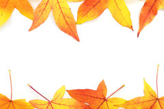 Autumn leaves Royalty Free Stock Photos