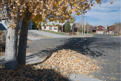Autumn leaves. Heap of autumn leaves under a cottonwood tree on a suburban street in western Colorado Stock Photography