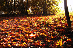 Autumn leaves. Red and yellow leaves on a footpath in fall royalty free stock image