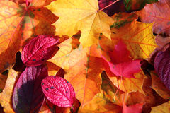 Autumn Leaves Fotos de Stock Royalty Free