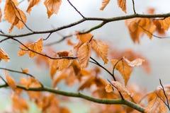 Autumn Leaves Royaltyfri Fotografi