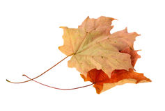 Free Autumn Leaves Stock Photography - 3983492