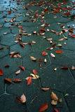 Autumn leaves. Autumnal Autumn leaves fall on ground Royalty Free Stock Photos