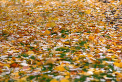 Free Autumn Leaves Royalty Free Stock Photo - 41897245