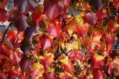 Autumn Leaves Royalty-vrije Stock Fotografie