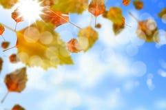 Autumn Leaves Foto de archivo