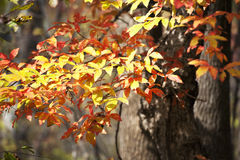 Autumn Leaves Immagine Stock