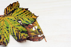 Autumn Leaves Fotos de archivo libres de regalías