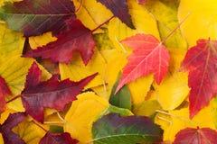 Autumn Leaves stock foto