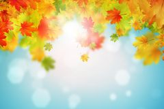 Autumn Leaves Stockfoto