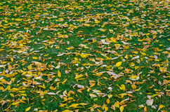Autumn Leaves Stock Foto's
