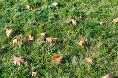 Autumn Leaves royalty-vrije stock foto's