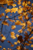 Autumn Leaves Fotografie Stock