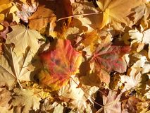 Autumn Leaves Fotografia Stock