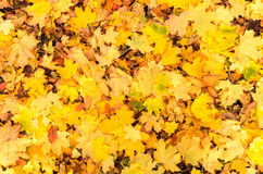 Autumn Leaves Imagen de archivo