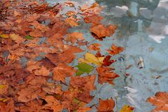 Autumn Leaves Royalty-vrije Stock Foto