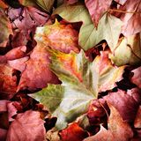 Autumn Leaves Stockfotos