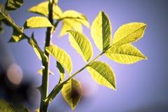 Autumn Leaves Fotografia de Stock