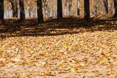 Autumn Leaves Imagem de Stock Royalty Free