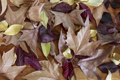 Autumn Leaves Photo libre de droits