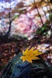 Autumn Leaves Fotografia Stock Libera da Diritti