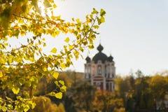 Autumn Leaves Lizenzfreies Stockbild