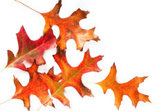 Free Autumn Leaves Stock Image - 4928021