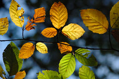 Autumn leaves. In the sun stock photography
