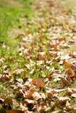 Autumn Leaves Imagens de Stock