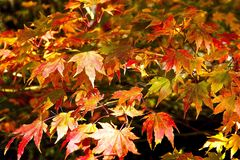 Autumn Leaves Image stock