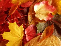 Autumn leaves. On the ground royalty free stock photos
