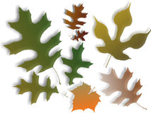 Autumn Leaves. Of different shapes isolated on a white background Royalty Free Stock Photos