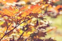 Autumn Leaves Stock Foto's