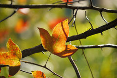 Autumn Leaves Image libre de droits