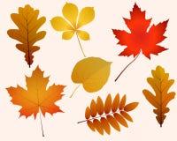 Autumn Leaves Royalty-vrije Stock Foto