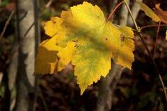Autumn Leaves fotografía de archivo