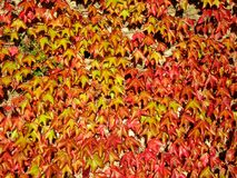 Autumn Leaves Royalty-vrije Stock Foto's