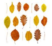 Autumn Leaves Royalty-vrije Stock Afbeeldingen
