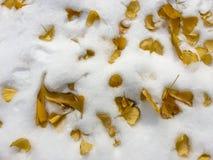 Autumn Leaves Stockfotografie