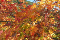 Autumn leaves. Leaves during the autumn season royalty free stock photos