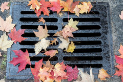 Autumn Leaves Lizenzfreie Stockfotos