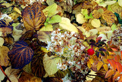 Autumn leaves. Early morning,color Royalty Free Stock Images