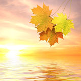 Autumn leaves. Above water in beams yellow sunset Stock Photos