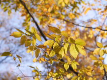 Autumn Leaves Photo stock