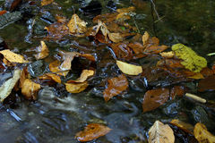 Autumn leaves. On stream stock image