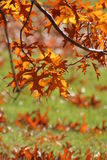 Autumn leaves. Fall colored leaves, unique perspective with shallow depth of field Stock Photos