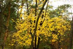 Autumn Leaves Lizenzfreies Stockfoto
