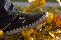 Autumn leaves. Kicking a bunch of leaves Stock Image