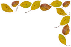 Autumn Leaves. Isolated on white Royalty Free Stock Photos